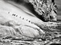 Penguins heading for the Ocean - photo by Sebastião Salgado in his Genesis exhibition.